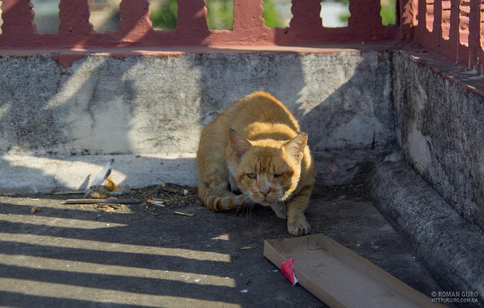 Индия. Часть 3. Джайпур (Розовый город)